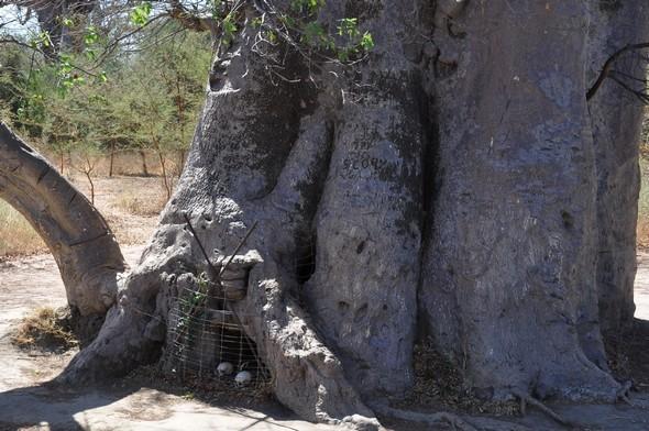 baobab-tombe.jpg
