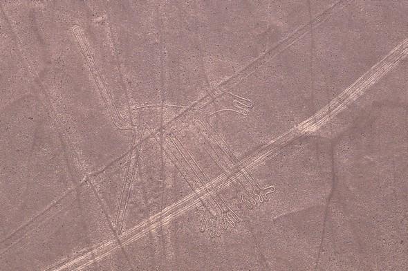 lignes de nazca 14.jpg