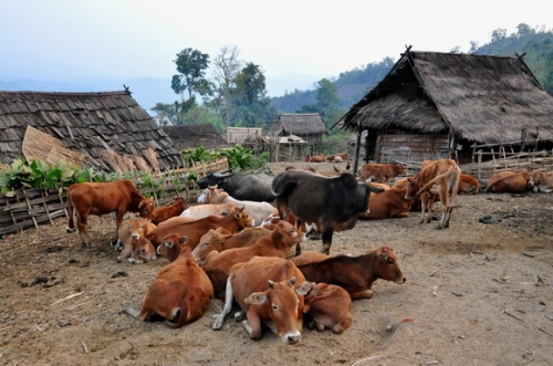 akha-village-phongsali-laos_27.JPG