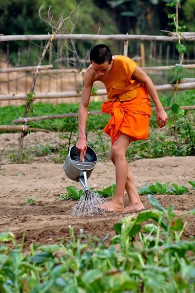 laos,luang prabang,moines
