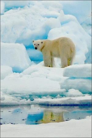 ours blanc spitzberg_12.JPG